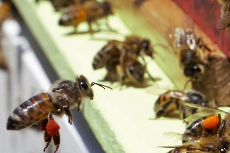 CRC for Honey Bee Products
